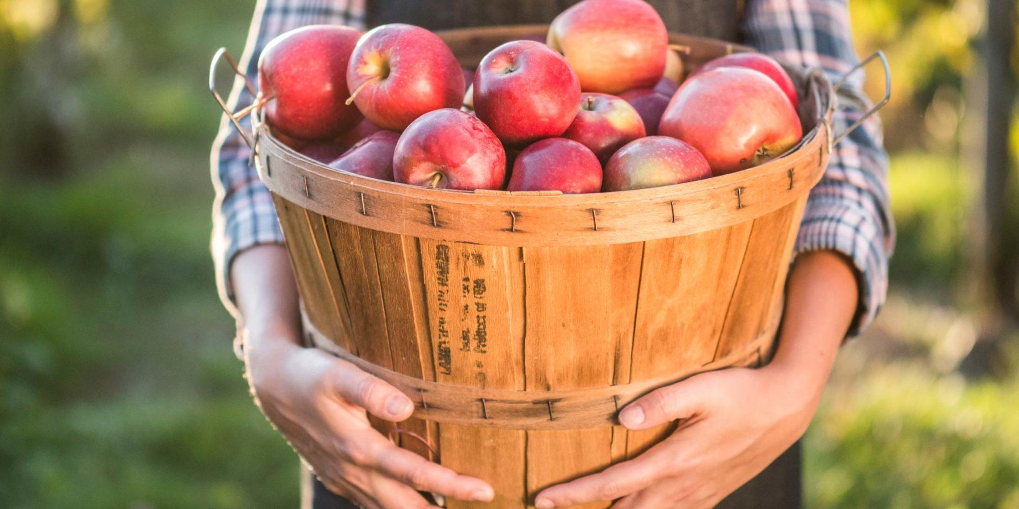 Image of apples in basket